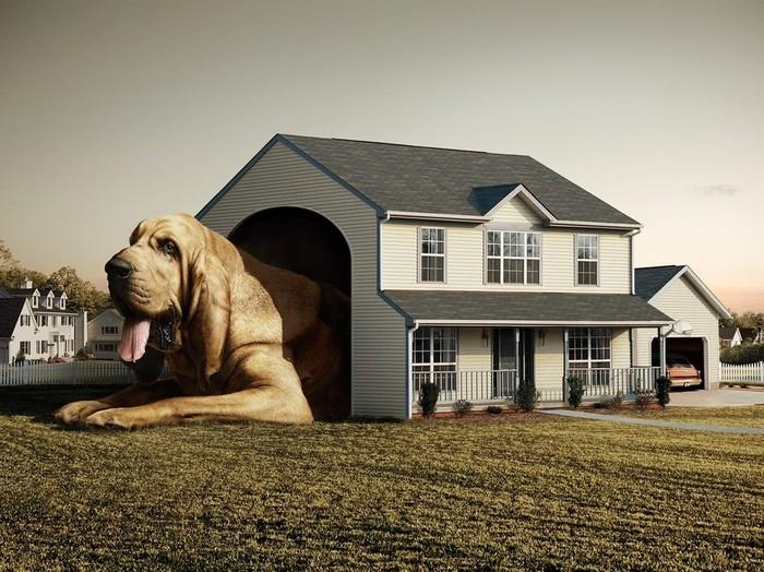 Как построить правильный вольер для собаки Служебные собаки, Уход и содержание, Вольер, Длиннопост