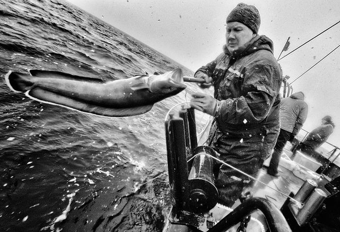 Люди моря Кольский полуостров, Баренцево море, Рыбалка, Длиннопост