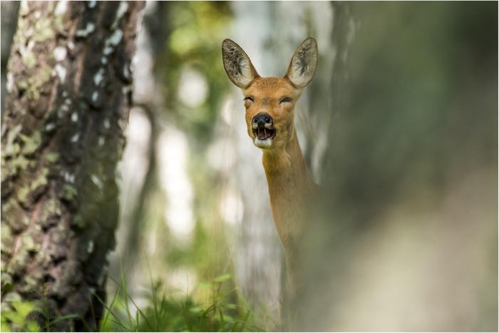 Какой милый оленёнок The National Geographic, Фотография, Олень, Милота