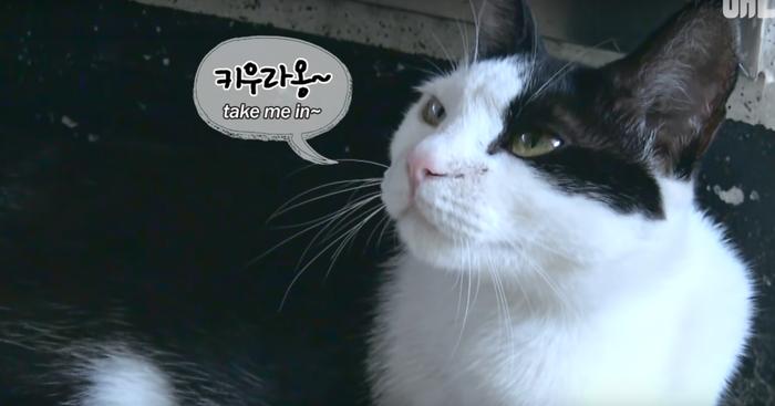 Если кошка выбрала тебя... Кот, Корея, Южная корея, Собака, Собаки против кошек, Видео, Длиннопост