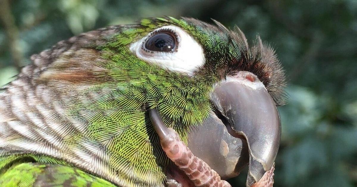 Для мамы, прикольные картинки попугаев