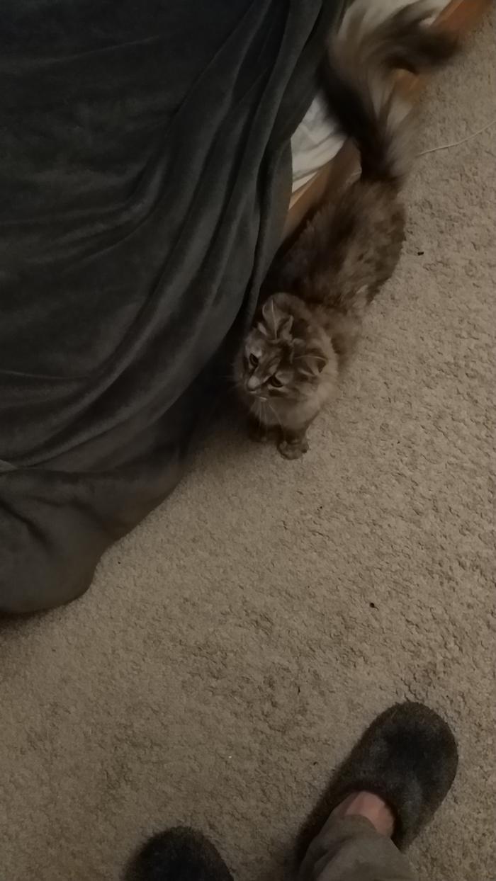 Коша нашла дом Кот, Потеряшка, Найденыш, Длиннопост