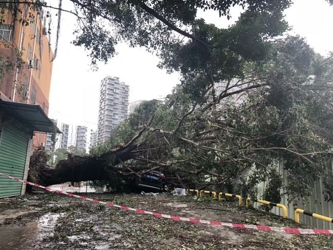 Тайфун Мангхут в Китае и его последствия