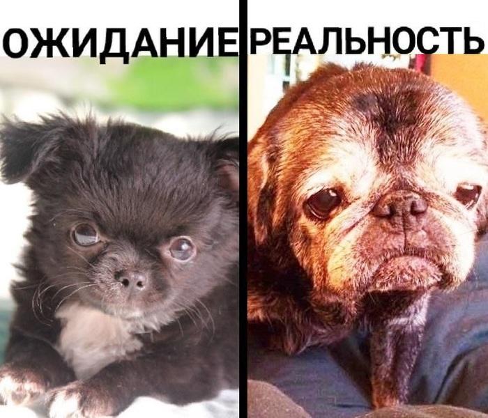 Маленькая собачка до старости...и после:( Неловкий момент, Молодость, Ожидание и реальность, Комплимент, Из жизни, Поговорки