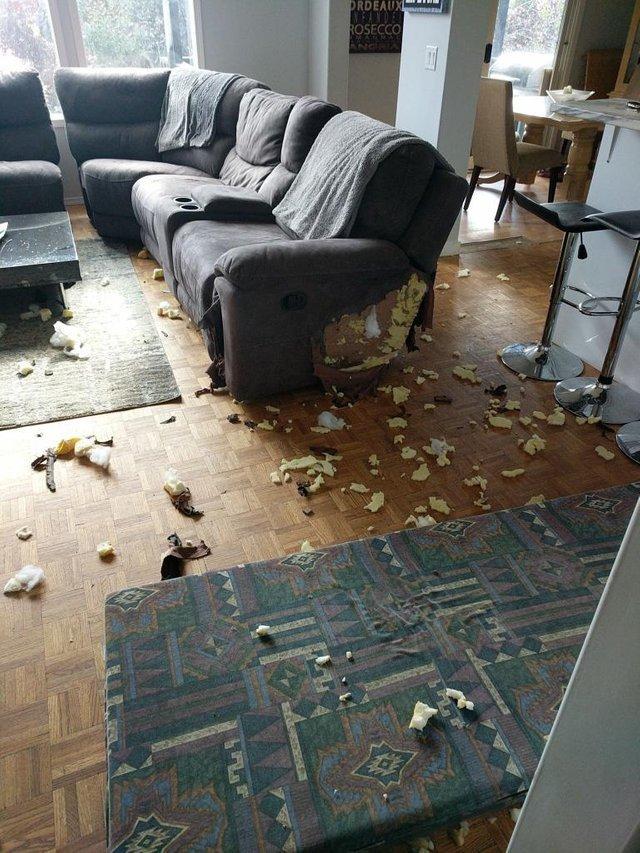 Когда мяч закатился под диван, а хозяев нет дома