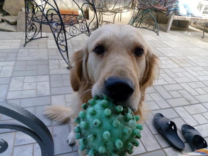 Я тут мячик старый откопала, пошли поиграем!)))