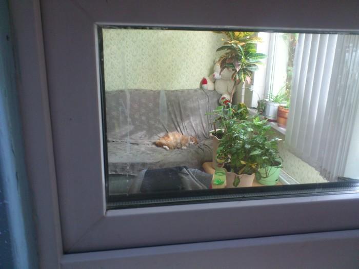 МОСКВА. Кот ищет дом Без рейтинга, Кот, Москва, В добрые руки, Длиннопост