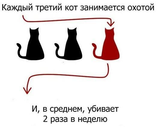 Котофакты дня Кот, Факты, Убийство, Животные, Котята, Длиннопост