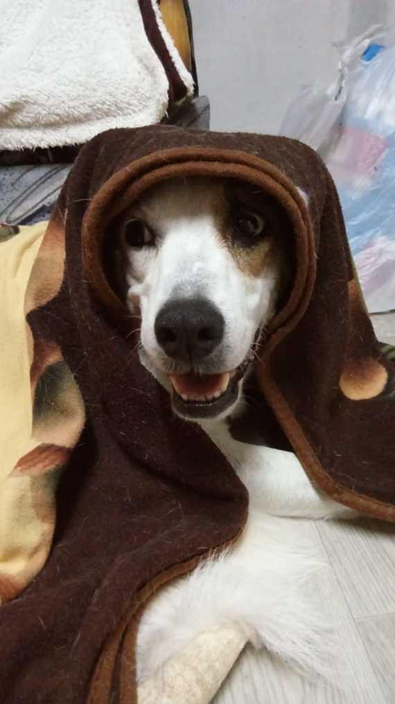 Собака-улыбака. Собака, Плед