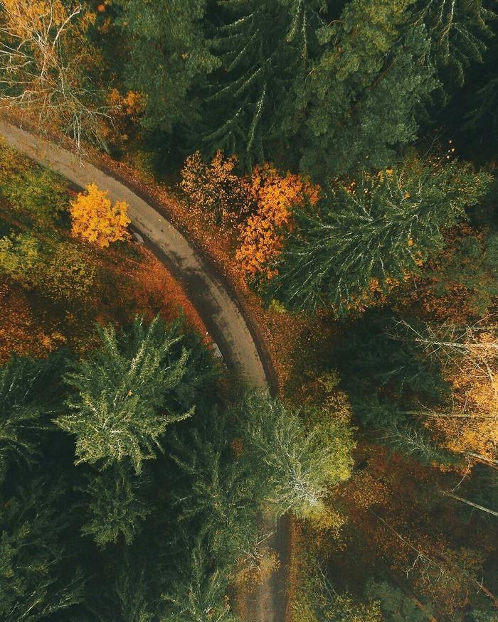 Осень Осень, Лес, Природа, Длиннопост