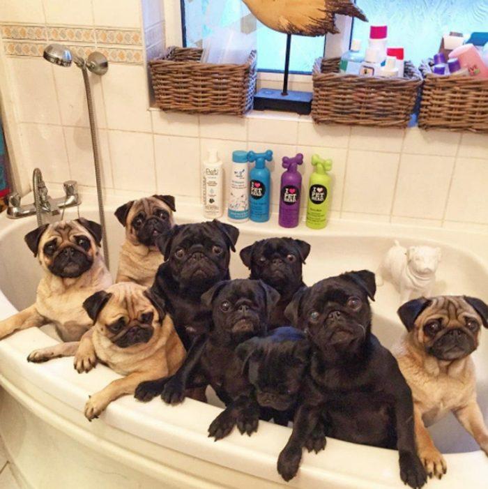 Мыться ?!