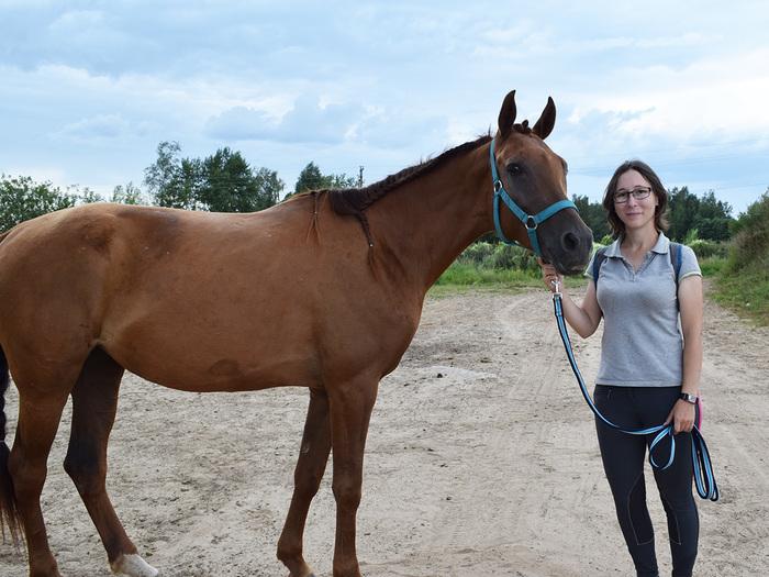 Как я стала куратором лошади Лошадь, Животные, Природа, Кураторство, Приют, Моё, Фотография, Длиннопост