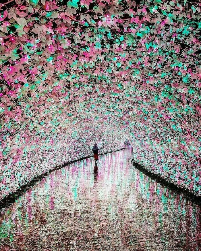 Цветочный тоннель в Японии. Фотография, Природа, Тоннель, Япония, Цветы, Растения, Красота природы, Красота, Длиннопост