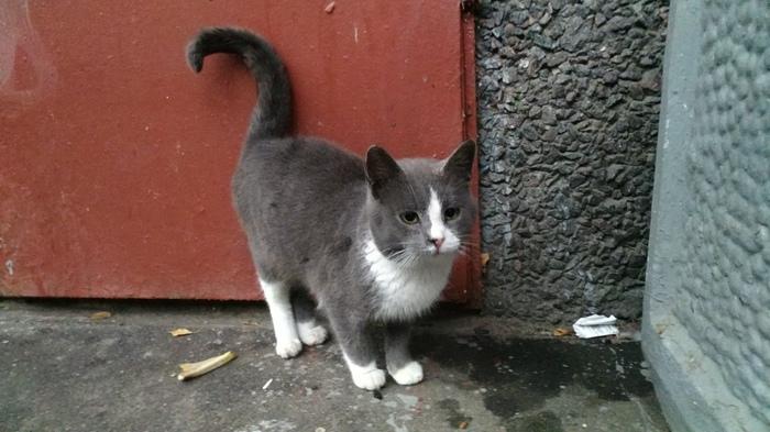 Возьмите котёнка, пожалуйста Санкт-Петербург, Кот, Улица, В добрые руки, Длиннопост