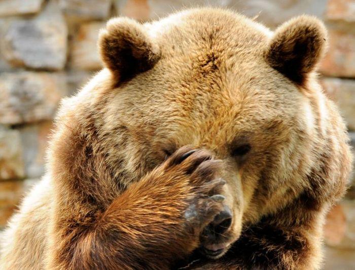 Что делать если встретится медведь? Выживание, Информация, Ценный совет