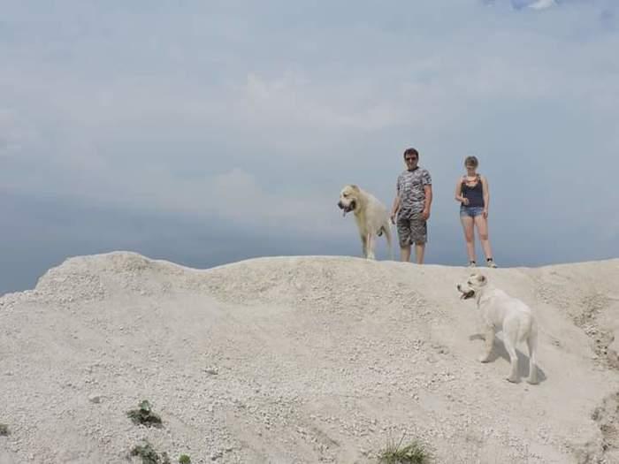 Подростаем потихоньку или путешествия с алабаями. Фотография, Алабай, Путешествия, Длиннопост