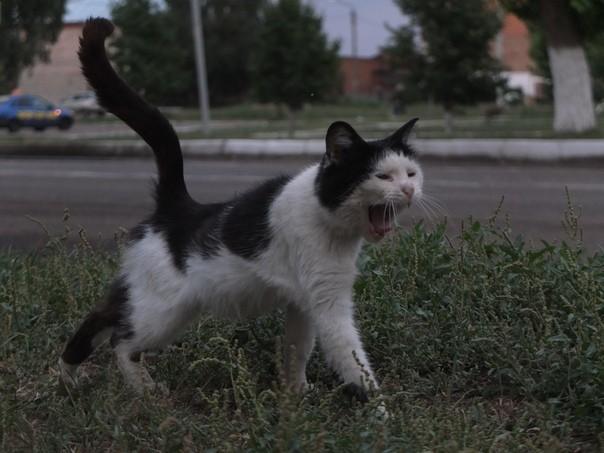 Кот Кот, Доброта, Побег, Любовь, Длиннопост