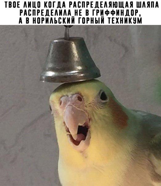 Распределяющая шляпа уже не та.