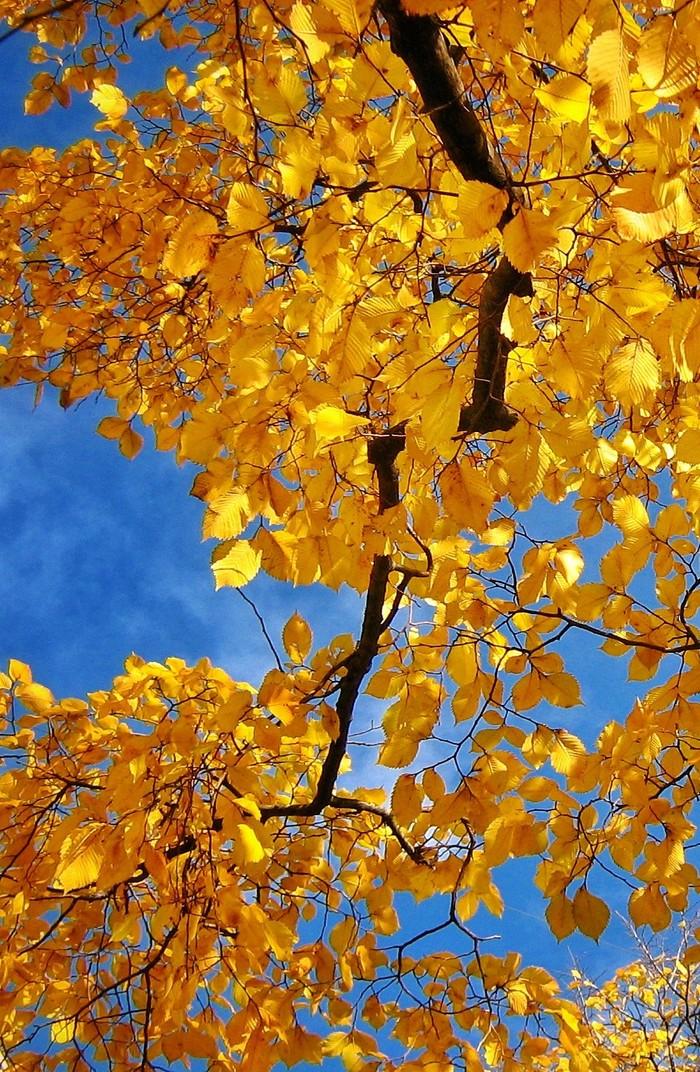 Осеннее настроение Фотография, Осень, Краски, Природа