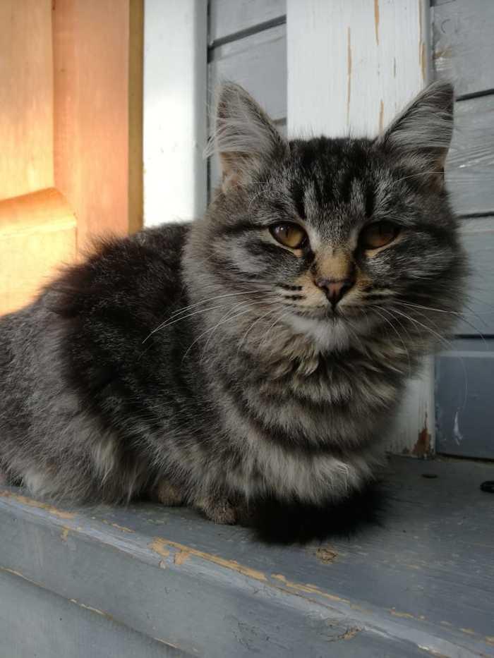 Кисла ищет дом Подмосковье, Кот, Новый дом для кошки, Без рейтинга, Длиннопост