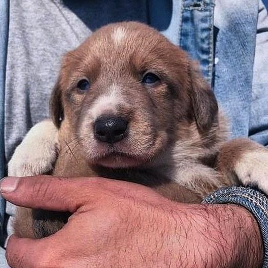 Пёсель ищет дом. Хабаровск Собака, Ищу дом, В добрые руки, Хабаровск, Без рейтинга