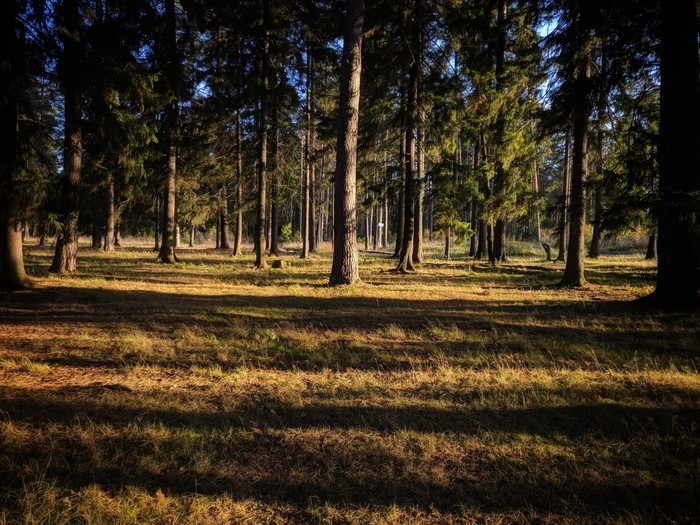 Грибная депрессия Грибы, Природа, Лес, Пустота, Тихая охота, Выкса, Выкса РФ, Нижегородская область, Длиннопост