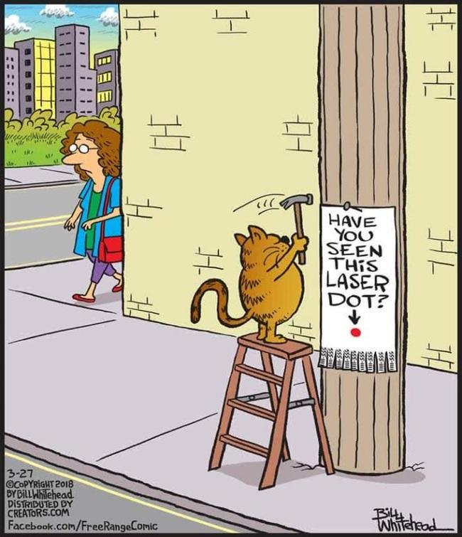 Разыскивается... Кот, Лазерная Указка