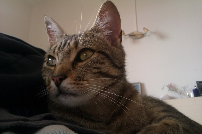 Такие вот коты Юмор, Кот, Тигр