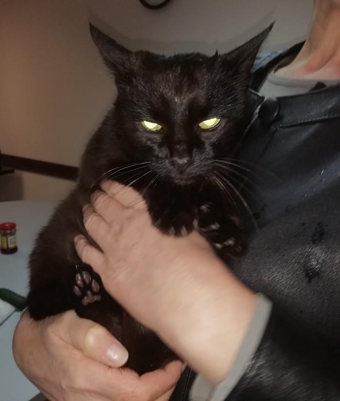 Кошечка нашла своего человека) Кот, Хорошие люди, В добрые руки