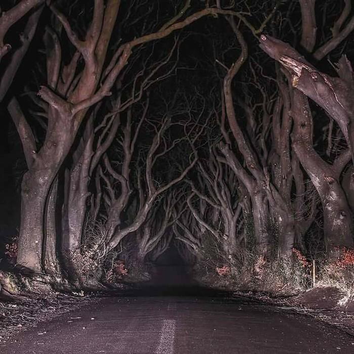 Природа создала в Ниндерландах лучшие декорации для Halloween!