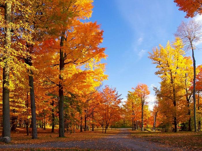 Немного Эстетики Осени