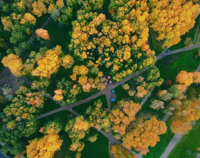 Осень Осень, Дрон, Санкт-Петербург