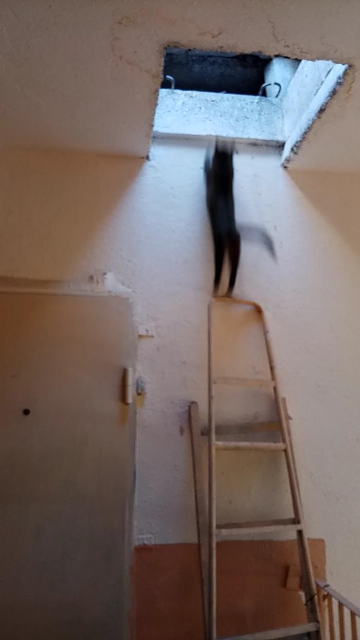 Кошка, чердак и соседи Кот, Крыша, Длиннопост