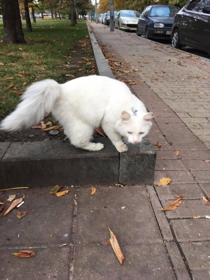 Найден белый кот у метро Парк Победы. Владелец, отзовись! Кот, Москва, Найден кот, В добрые руки, Ищу хозяина, Без рейтинга