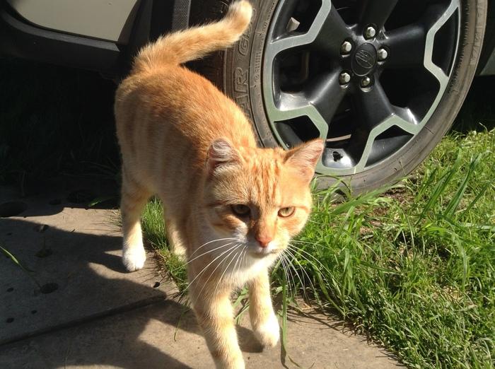 Котик ищет дом (Новосибирск) Без рейтинга, Кот, Ищет дом, Новосибирск, Ищу хозяина, Ищу дом, В добрые руки