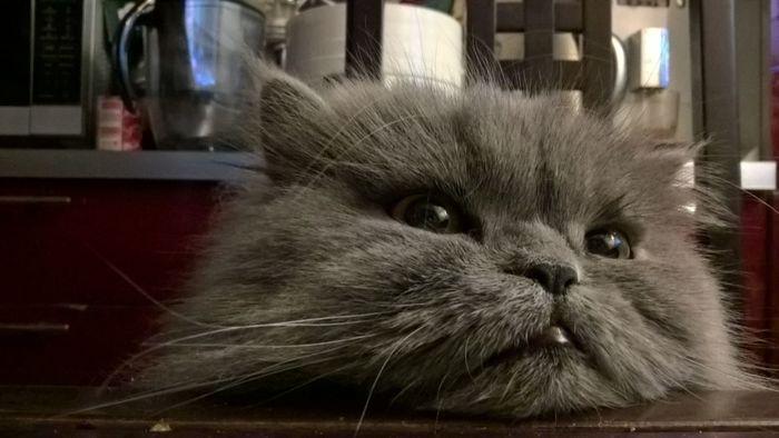 Пятничный кот Кот, Пятница