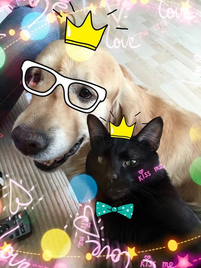 Традиции пост. Про котэ и собакена. Питомец, Первый пост, Длиннопост, Собака, Кот