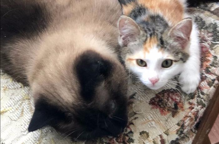 Сказ о том, как появляются кошки в доме Кот, Случай из жизни, Длиннопост