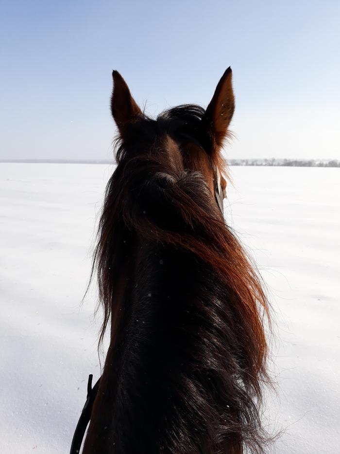 Утро воскресенья #2 Лошадь, Зима, Спорт, Длиннопост