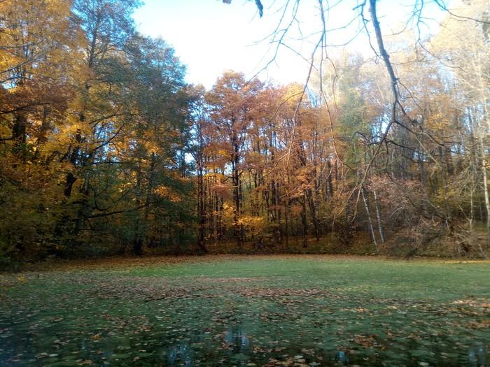 Осень Осень, Стрекоза, Природа, Длиннопост