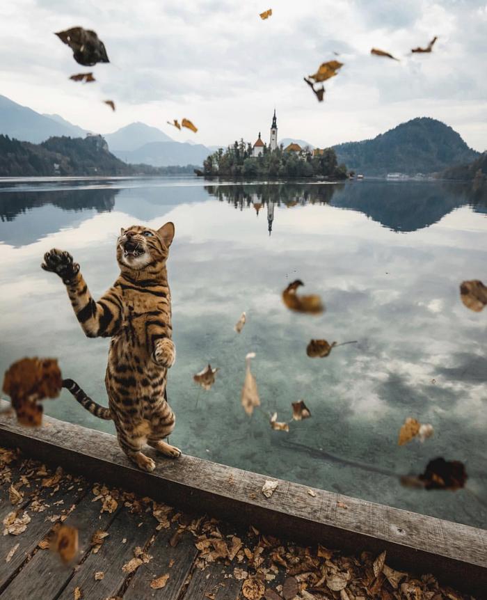 Погоня за листьями в Словении