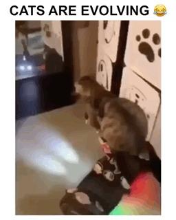 Кошки эволюционируют!