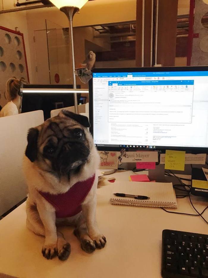 Помощник на работе