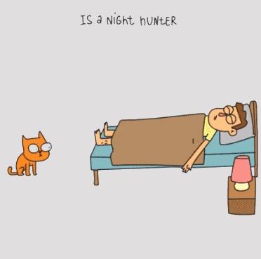 Когда у вас есть кошка Гифка, Кот, Анимация, Длиннопост