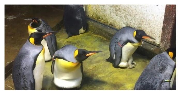 Похитители-пи Пингвины, Гетеросексуалы, Геи, Семья, Дети, Кража
