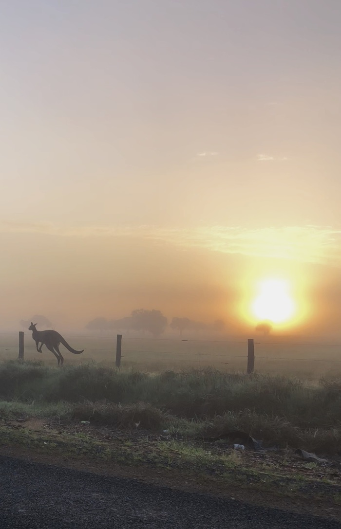 Утро, улица, туман Австралия, Кенгуру, Туман, Фотография, Рассвет, Животные