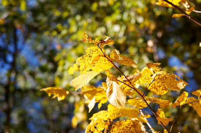Встреча золотой осени Фотография, Осень, Природа, Nikon, D90
