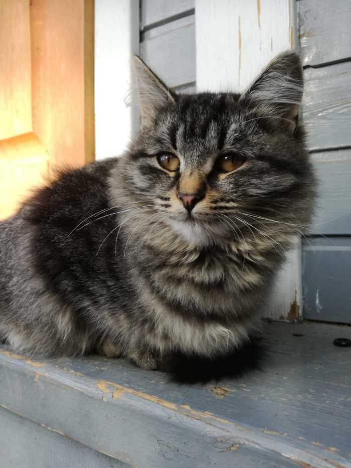 Кошка все еще ищет дом Кот, Ищу дом, Москва, Ищу хозяина, Длиннопост, В добрые руки, Без рейтинга