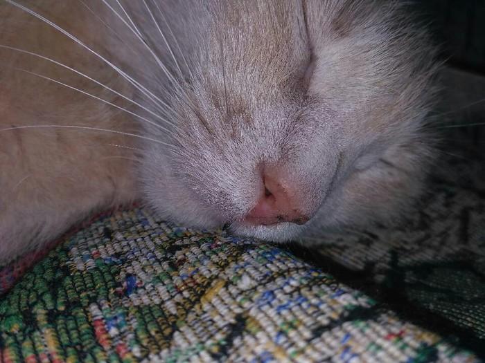 Котя спит