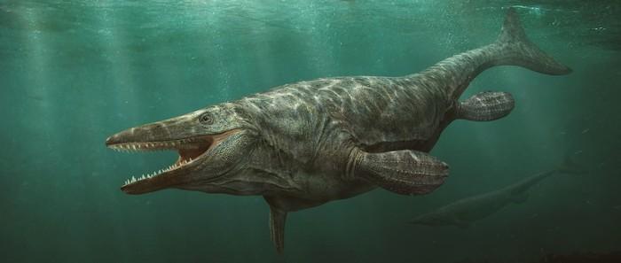 Тилозавры. Палеонтология, Окаменелости, Ящерица, Мезозой, Хищник, Длиннопост